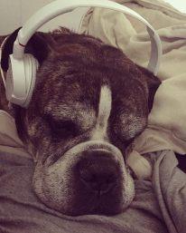 Nash Is Quite The Rocker Dog